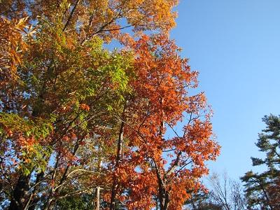河口湖は紅葉の季節