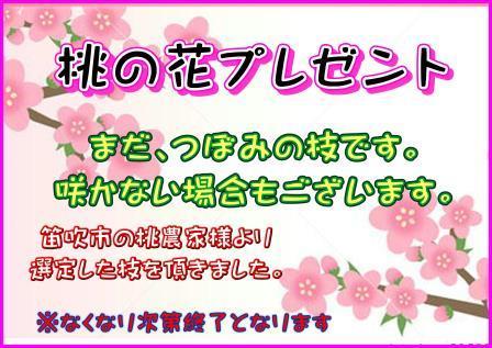 明日2月24日、桃の枝プレゼント!!